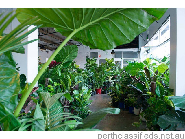 Brisbane - Huge Indoor Plant Sale - Virtual Indoor Plant Sale - 1