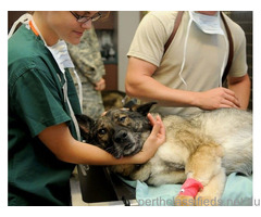 The best veterinarian - Pet services Perth